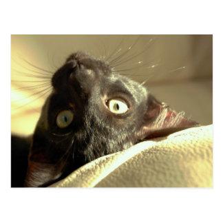 Upside down cat! postcards