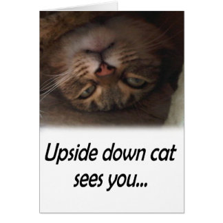 Upside down cat sees you greeting card