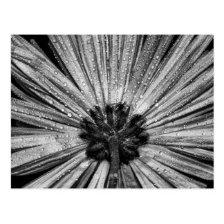 Upside Down Flower in Black & White Postcard