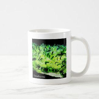 Upside Down Jellyfish / Cassiopea Classic White Coffee Mug