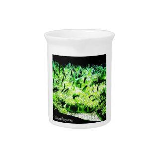Upside Down Jellyfish / Cassiopea Beverage Pitchers
