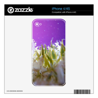 Upside Down Jellyfish Decal For The iPhone 4S