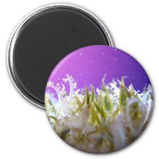 Upside Down Jellyfish 2 Inch Round Magnet