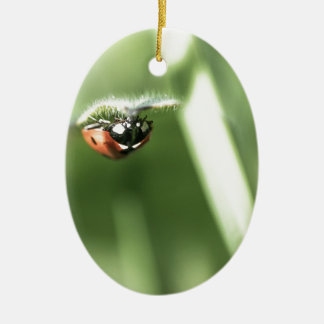Upside down Ladybird Ceramic Ornament