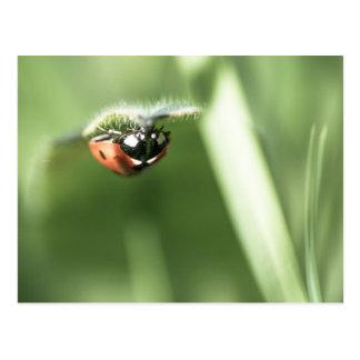 Upside down Ladybird Post Card