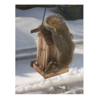 Upside Down Squirrel Postcard