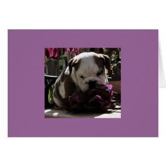 UpstateBulldogs.info NoteCard Cards