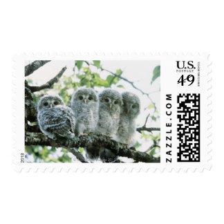 Ural owetsl. Ikeda-machi, Hokkaido, Japan Stamps