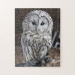 Ural Owl Jigsaw Puzzles