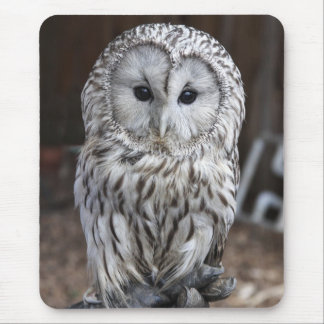 Ural Owl Mouse Pad