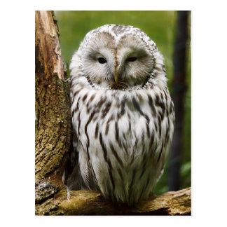 Ural Owl perched on a limb Postcard
