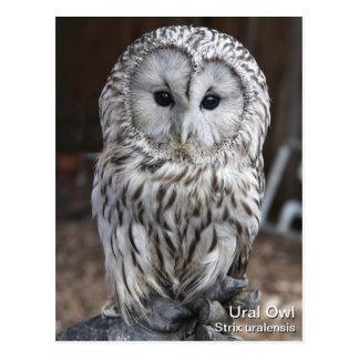 Ural Owl Post Card