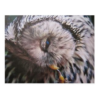 Ural owl postcard