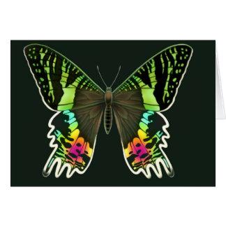 Urania Sunset Moth Greeting Card