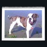 "Urban Doo Crash Calendar<br><div class=""desc"">American Bulldog Calendar</div>"