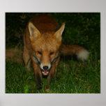 Urban Fox Poster