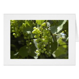 Urban Green Grapes on the vine Card