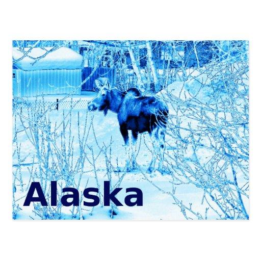 Urban Moose Post Cards