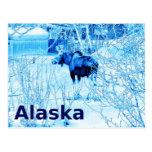 Urban Moose Postcard