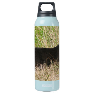 Urban Panther Insulated Water Bottle