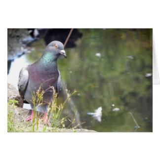 Urban Pigeon Greeting Card
