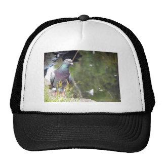 Urban Pigeon Trucker Hats