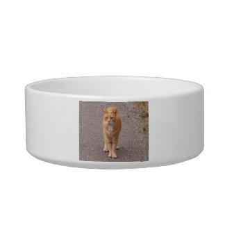 Urban Tiger Cat Food Bowl