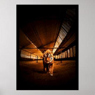 Urban tiger poster
