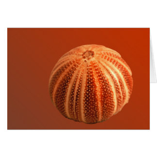 Urchin Card