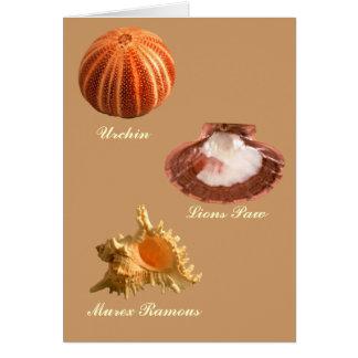 Urchin, Lions Paw, Murex Ramous Card