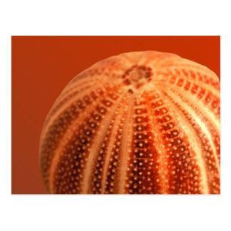 Urchin Postcard