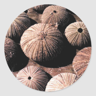 Urchins Classic Round Sticker