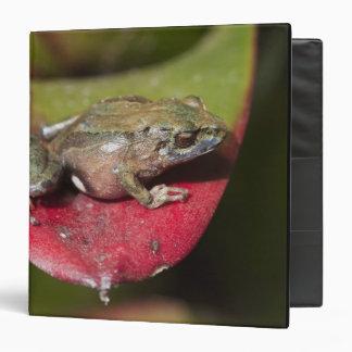 Urdaneta Robber Frog Pristimantis orestes) 3 Ring Binder