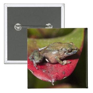 Urdaneta Robber Frog Pristimantis orestes) Button