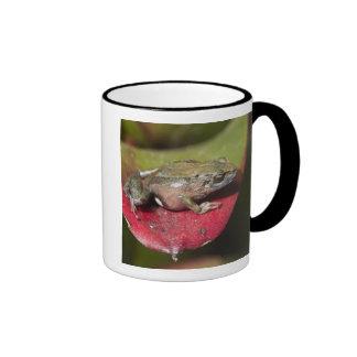 Urdaneta Robber Frog Pristimantis orestes) Ringer Mug