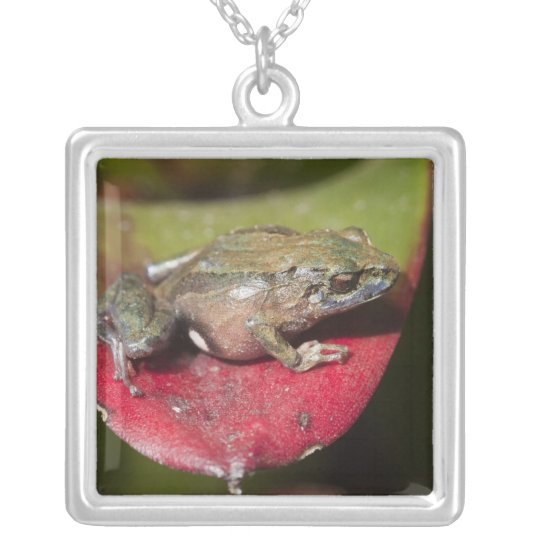 Urdaneta Robber Frog Pristimantis orestes) Silver Plated Necklace