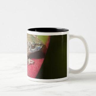 Urdaneta Robber Frog Pristimantis orestes) Two-Tone Coffee Mug