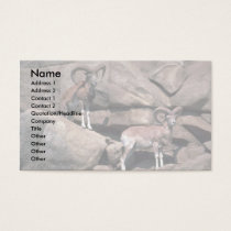 Urial sheep business card
