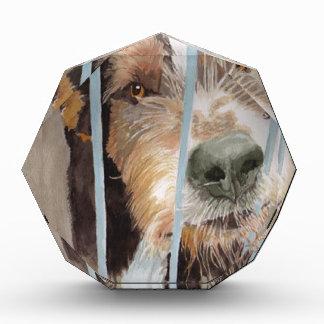 Urmel the Rescue Dog Awards