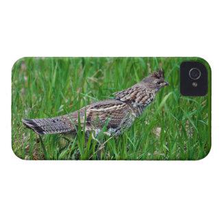 Urogallo salvaje, Quali, pájaro de tierra del Funda Para iPhone 4