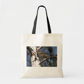 Urogallo superado encaramado en un árbol de abedul bolsa