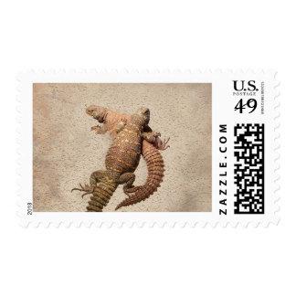 Uromastyxs - lagartos adorables sello postal