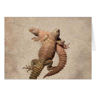 Uromastyxs - lagartos adorables tarjeta de felicitación
