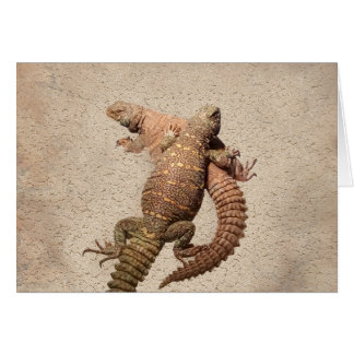 Uromastyxs – Lovable Lizards Card