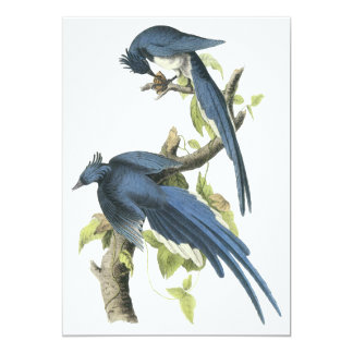 "Urraca Jay, Juan Audubon Invitación 5"" X 7"""