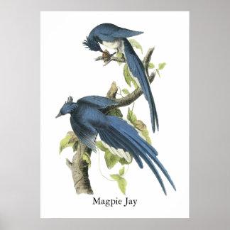 Urraca Jay, Juan Audubon Póster