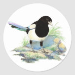 Urraca - pájaro de la acuarela etiqueta redonda