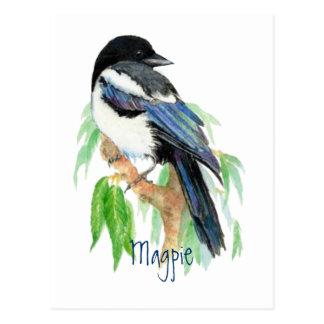 Urraca, pájaro, jardín, naturaleza, fauna postal