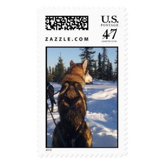 Ursa X-Back Stamp