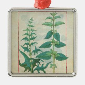 Urticaceae Ornamentos Para Reyes Magos
